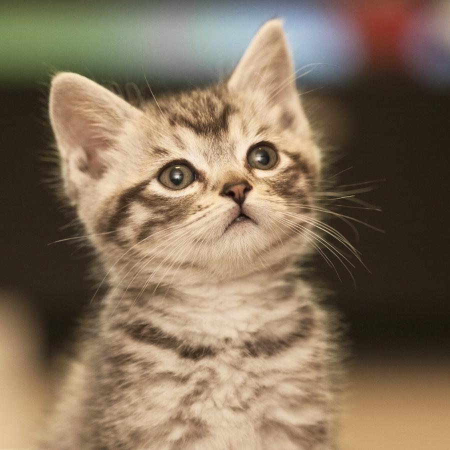 A small kitten.